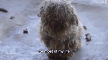 Humane Society TV Spot, 'Mikhail's Story' - Thumbnail 2