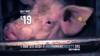 Humane Society TV Spot, 'Mikhail's Story' - Thumbnail 7