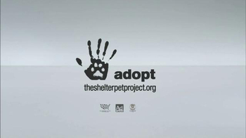The Shelter Pet Project TV Spot, 'A Shelter Cat that Wants to Meet you' - Thumbnail 9