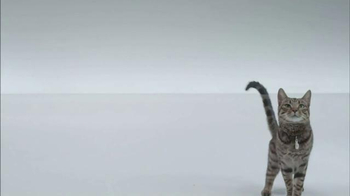 The Shelter Pet Project TV Spot, 'A Shelter Cat that Wants to Meet you' - Thumbnail 1