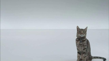 The Shelter Pet Project TV Spot, 'A Shelter Cat that Wants to Meet you' - Thumbnail 2
