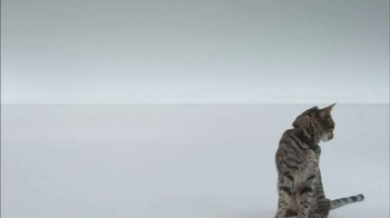 The Shelter Pet Project TV Spot, 'A Shelter Cat that Wants to Meet you' - Thumbnail 3