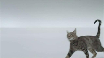 The Shelter Pet Project TV Spot, 'A Shelter Cat that Wants to Meet you' - Thumbnail 4