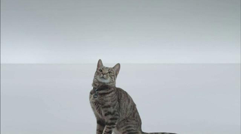 The Shelter Pet Project TV Spot, 'A Shelter Cat that Wants to Meet you' - Thumbnail 5