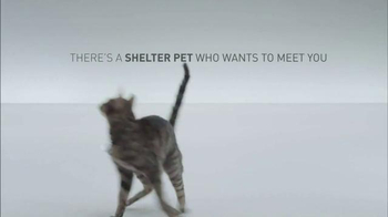 The Shelter Pet Project TV Spot, 'A Shelter Cat that Wants to Meet you' - Thumbnail 7