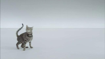 The Shelter Pet Project TV Spot, 'A Shelter Cat that Wants to Meet you' - Thumbnail 8