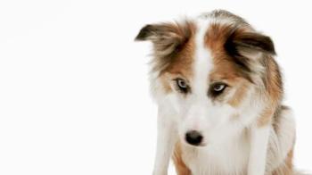 1-800-PetMeds TV Spot, 'When It's Cold Outside' - Thumbnail 3
