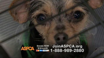 ASPCA TV Spot, 'You Can Change Everything' - Thumbnail 7