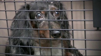ASPCA TV Spot, 'You Can Change Everything' - Thumbnail 1