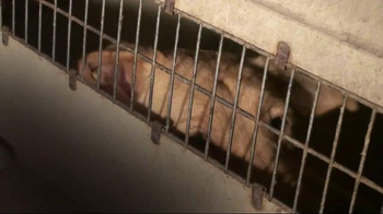 ASPCA TV Spot, 'You Can Change Everything' - Thumbnail 2