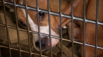 ASPCA TV Spot, 'You Can Change Everything' - Thumbnail 3