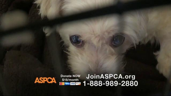 ASPCA TV Spot, 'You Can Change Everything' - Thumbnail 4