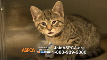 ASPCA TV Spot, 'You Can Change Everything' - Thumbnail 5