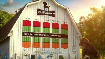 Hill's Ideal Balance Dog Food TV Spot, 'Balanced Ingredients' - Thumbnail 5