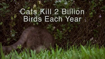 Hillsborough Animal Health Foundation TV Spot, 'Bird Conservation' - Thumbnail 4