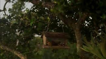 Hillsborough Animal Health Foundation TV Spot, 'Bird Conservation' - Thumbnail 6