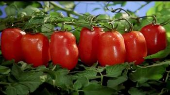 Cento Peeled Tomatoes TV Spot, 'Secret Ingredient' - Thumbnail 10