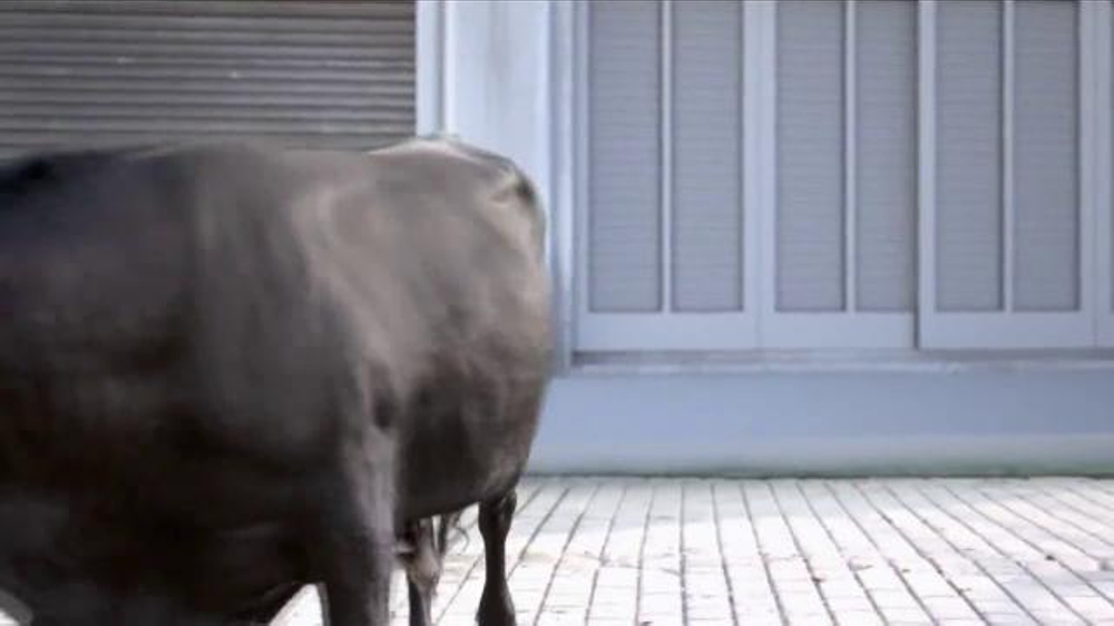 2015 Nissan Rogue TV Commercial, 'Bull Chase' - iSpot.tv