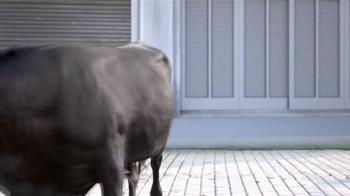 2015 Nissan Rogue TV Spot, 'Bull Chase' - Thumbnail 8