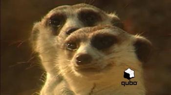 Qubo.com thumbnail