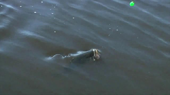 Visit Florida TV Spot, 'Fishing Capital of the World' - Thumbnail 4