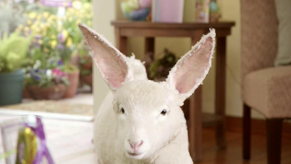 Kmart easter shoes tv commercial lamb bit ispot negle Gallery