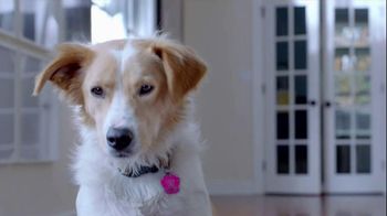 The Shelter Pet Project TV Spot, 'Dog Learns About Humans' - Thumbnail 1