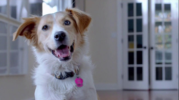 The Shelter Pet Project TV Spot, 'Dog Learns About Humans' - Thumbnail 2