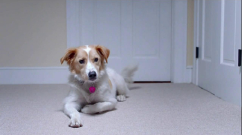 The Shelter Pet Project TV Spot, 'Dog Learns About Humans' - Thumbnail 5
