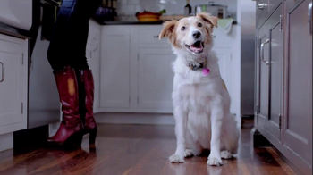 The Shelter Pet Project TV Spot, 'Dog Learns About Humans'