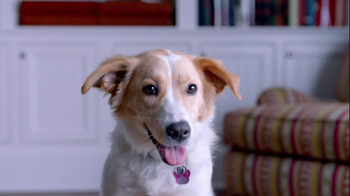 The Shelter Pet Project TV Spot, 'Dog Learns About Humans' - Thumbnail 7