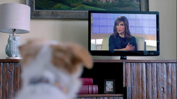The Shelter Pet Project TV Spot, 'Dog Learns About Humans' - Thumbnail 8