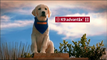 K9 Advantix II TV Spot, 'More than a Nuisance' - 163 commercial airings