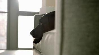 Bissell SpotBot Pet TV Spot, 'Black Labs' - Thumbnail 1