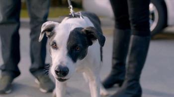 2013 Honda CR-V TV Spot, 'Growling Dog' - Thumbnail 9