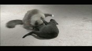 Cat's Meow TV Spot - Thumbnail 1