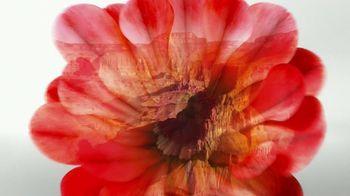 Air Wick Cactus Flower TV Spot, 'Captivating Cactus'