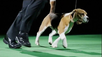 Purina Pro Plan Westminster TV Spot, 'Best in Show: Miss P' - Thumbnail 4