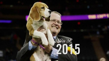 Purina Pro Plan Westminster TV Spot, 'Best in Show: Miss P' - Thumbnail 8