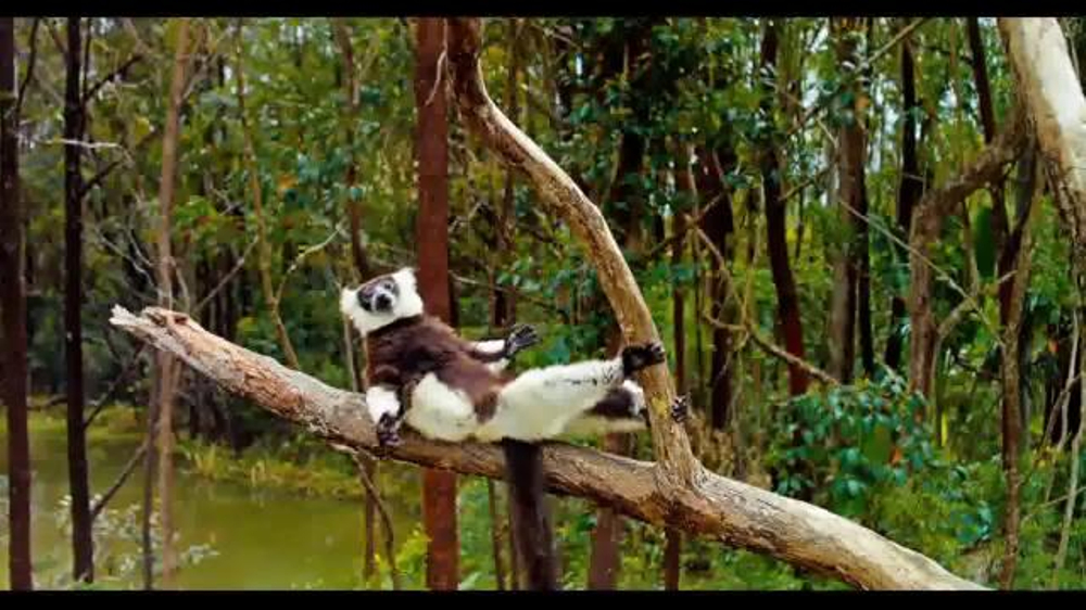 Island Of Lemurs: Madagascar TV Movie Trailer