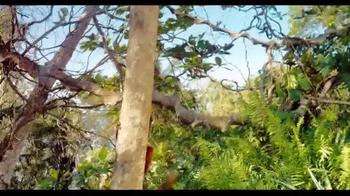 Island Of Lemurs: Madagascar - Thumbnail 3