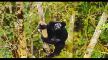 Island Of Lemurs: Madagascar - Thumbnail 4
