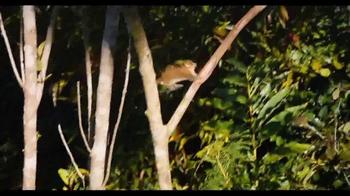 Island Of Lemurs: Madagascar - Thumbnail 5