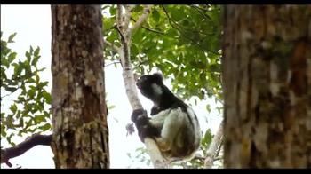 Island Of Lemurs: Madagascar - Thumbnail 6