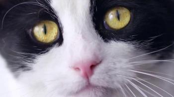 Wellness Pet Food TV Spot, 'Wella' - Thumbnail 5