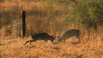 Whitetail Institute of North America TV Spot, 'More Deer' - Thumbnail 5