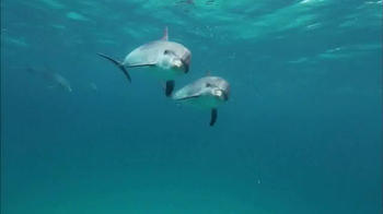 Oceana TV Spot, 'Keep Dolphins Singing' Featuring Miranda Cosgrove - Thumbnail 2