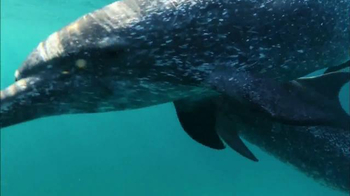 Oceana TV Spot, 'Keep Dolphins Singing' Featuring Miranda Cosgrove - Thumbnail 6