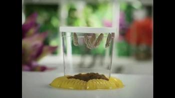 Live Butterfly Garden TV Spot - Thumbnail 4