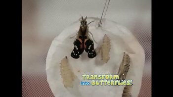 Live Butterfly Garden TV Spot - Thumbnail 5